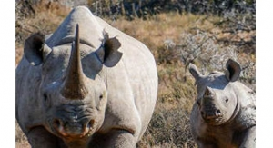 MTN Group, IBM to Harness IoT to Save Africa's Rhinos